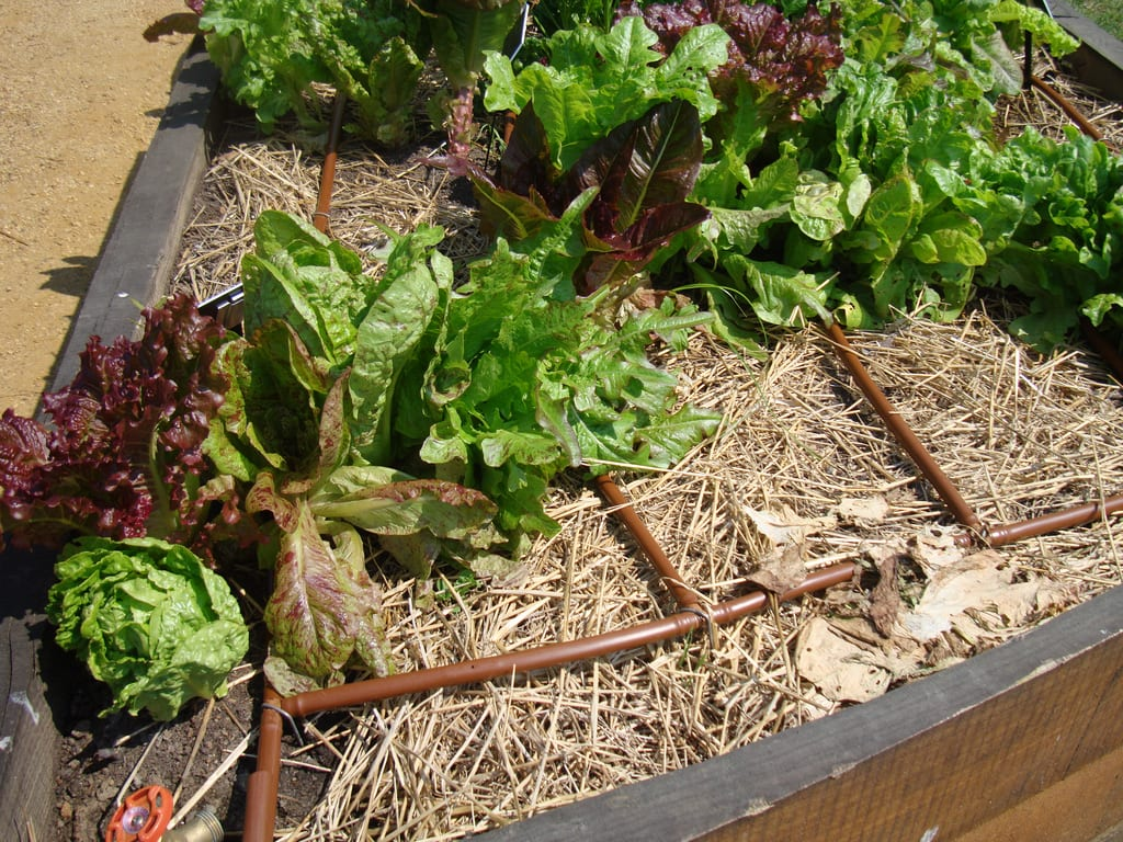 Drip Irrigation Important for your Garden