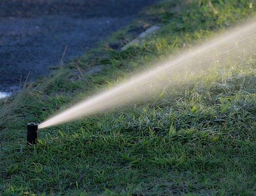 Why You Need To Fix Broken Sprinkler Heads ASAP