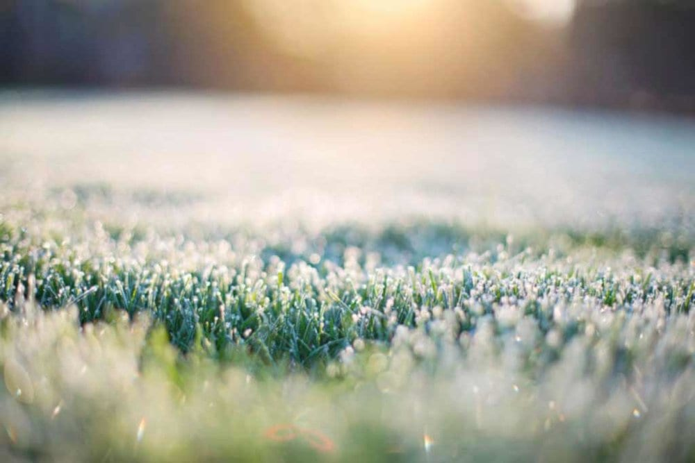 Should You Water Your Lawn In The Winter